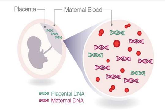 Što je slobodna DNA?